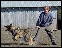 Dog Protection Training